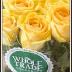 whole-trade-roses_yellow