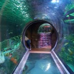 Sea Life Aquarium: Small in Size, Big on Entertainment
